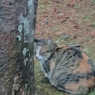 チトセピアの植え込みに住み着いてたチトセちゃん