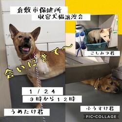 倉敷市保健所 収容犬猫譲渡会・見学会