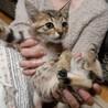 めちゃかわハッピー美猫の子猫ちゃん サムネイル2
