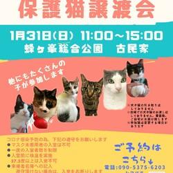 第12回保護猫譲渡会in山口県