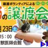 猫の譲渡会☆大須商店街すぐ