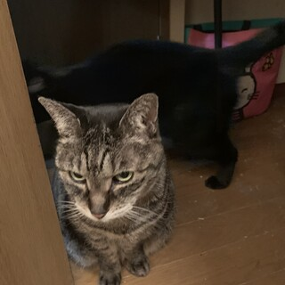 亡き母が大事に育てた高齢のメス猫二匹です