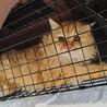 急募!空き家で凍える猫