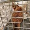 急募!空き家で凍える猫 サムネイル2