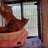 急募!空き家で凍える猫 サムネイル3