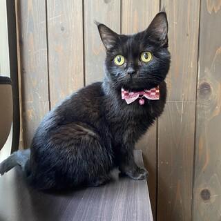 小柄でかわいい 黒猫のうにちゃん