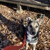 生後5ヶ月ミックス犬(トライアル決定、一時停止)