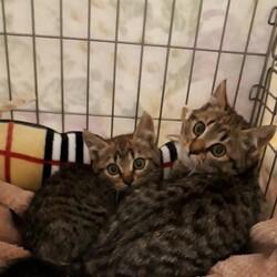 【野崎参道商店街】毎日保護猫の譲渡会