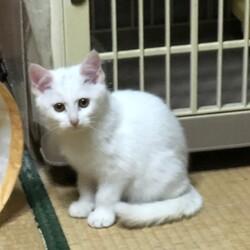 (中止)名古屋市昭和区 昭和区生涯学習センター 1月17日(日)第111回リトルパウエイド猫の譲渡会