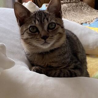 猫も人も大好きな甘えん坊男子☆人馴れ抜群です♪