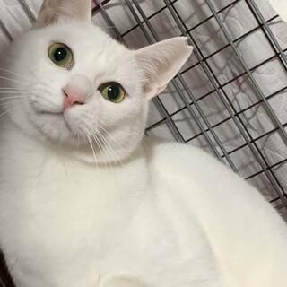 白猫ブラン君