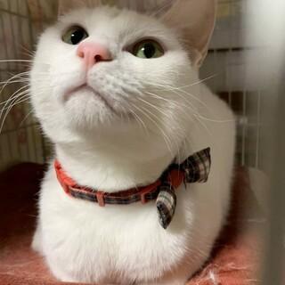 白猫ビアンカ