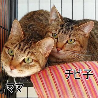 ママ(仮)  〜優しいお母さん〜