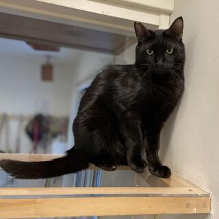 かっこいい黒猫ピカソくん