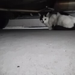 「見知らぬ猫現る」サムネイル1