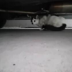 「見知らぬ猫現る」サムネイル2
