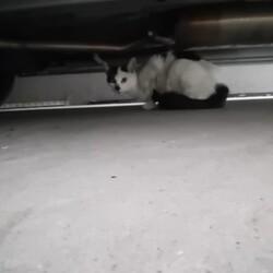 「見知らぬ猫現る」サムネイル3