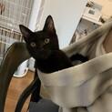 人が大好きな黒猫ルビ