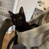 人が大好きな黒猫ルビ、里親さま決定