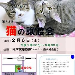 猫の譲渡会in灘区 ¨ 猫のミーナ ¨