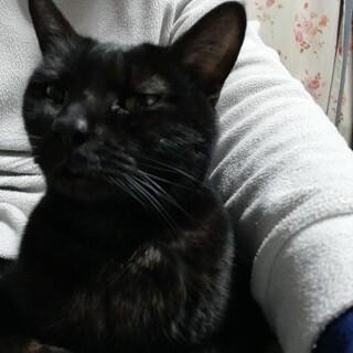 人懐っこい、甘えん坊のかわいい黒猫の女の子です。