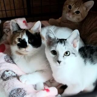 【募集停止】子猫3匹います!