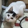 抱っこ大好き・肩乗り猫のフンちゃん サムネイル2
