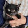 3ヶ月の黒猫ちゃん