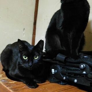 黒猫2匹★ベル&ルック里親募集У岐阜~