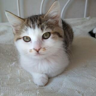 10月生まれの子猫 数字シリーズ第4弾 ビリ♀