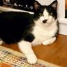 大柄・おっとり・猫じゃらし大好き!な『ちょび』 サムネイル3