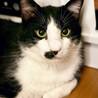 大柄・おっとり・猫じゃらし大好き!な『ちょび』 サムネイル4