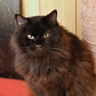 フォンズはクールな一匹猫です 。