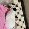 抱っこ大好き・肩乗り猫のフンちゃん サムネイル6