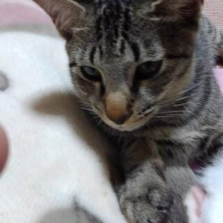 1/17,24 松猫お見合い会参加 ほっぺくん!