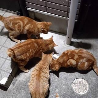 人慣れした4兄弟と茶トラの母猫☆
