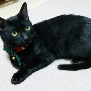 人が大好きでベタベタな黒子猫です=^_^=
