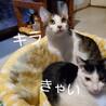 動画あり★頭の上は私の独壇場よテヘ♡キラ サムネイル2