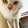 飼い主さんが急逝された親子猫