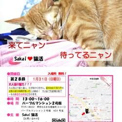 魅力的な大人猫のSakai♥猫活 譲渡会