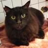 最初はビビり。慣れるとスリゴロ!長毛黒猫『タク』