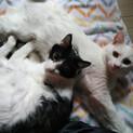 マブダチのハンサム猫、マシュマロとハナ