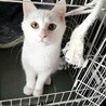 マブダチのハンサム猫、マシュマロとハナ サムネイル3