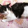 マブダチのハンサム猫、マシュマロとハナ サムネイル4