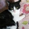 マブダチのハンサム猫、マシュマロとハナ サムネイル5