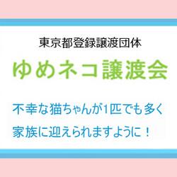 ★ゆめネコ譲渡会★茅場町駅 12番出口 歩1分 サムネイル3