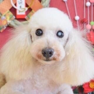 美犬♡ソフィアちゃん