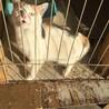人懐こい三毛猫です