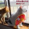 仲良しな猫たちと毎日を楽しく賑やかに♡ サムネイル2