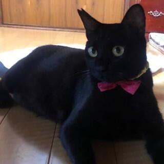 人大好き、甘えん坊、お喋りな黒猫君❣️